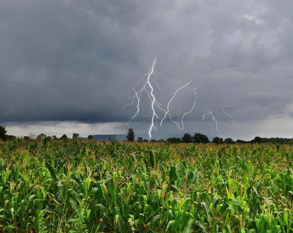 Carbon Nitrogen Ratio For Crops